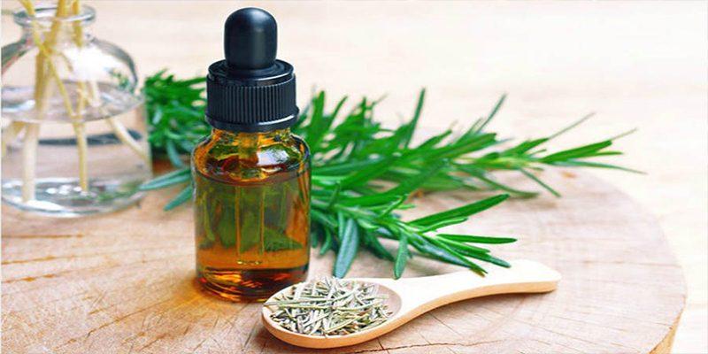 Công dụng của cây hương thảo trong cuộc sống